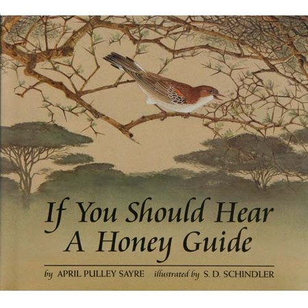 April Sayre's Book If You Should Hear a Honey Guide